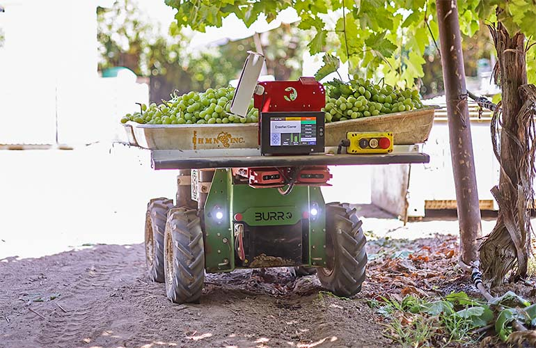 Burro robot carries harvested crops